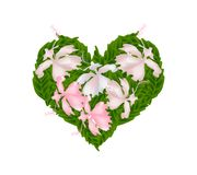 Pink Hibiscus Flowers in A Heart Shape Royalty Free Stock Photos