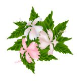 Pink Hibiscus Flowers or Pink Rose Mallow Flowers Stock Photography