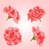 Pink hibiscus flowers vector Stock Photography