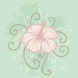 Pink hibiscus on a light green background Stock Photos