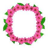 Pink Hibiscuses Frame Stock Photography