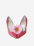 Pink High Heels. And a pink daisy flower isloated with copy space Stock Photos