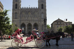 Pink horse-drawn carriage in Montreal on Place d'Armes Stock Image