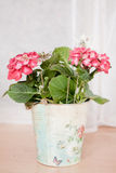 Pink hortensia in bucket Stock Image