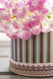 Pink hortensia flower in striped box. Selective focus Royalty Free Stock Photography