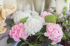 Pink hortensia flowers. Stock Photo