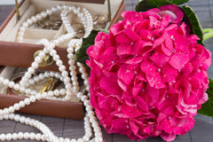 Pink hortensia flowers and jawel box close up Stock Photo