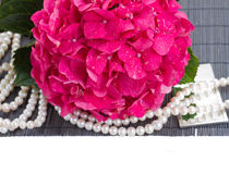 Pink hortensia flowers and pearls Stock Image