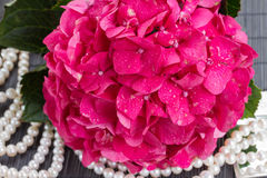 Pink hortensia flowers and pearls Stock Photo