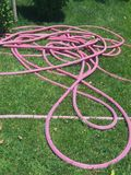 Pink Hose. Pink convoluted hose for water on green grass Stock Photo