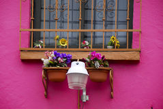 Pink house in Coyoacan. Pink house and window in Coyoacan, Mexico City Royalty Free Stock Image