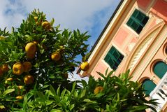 Pink house and orange tree Stock Photography