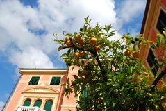 Pink house and orange tree Royalty Free Stock Photography