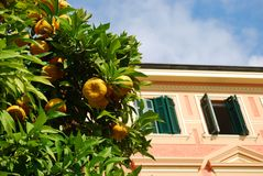 Pink house and orange tree Stock Photos