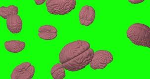 Pink human Brains falling rain genius intelligence green screen 3d animation chroma key