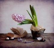 Pink hyacinth Royalty Free Stock Photos
