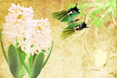 Pink  hyacinth and butterfly Royalty Free Stock Photography
