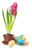 Pink hyacinth and easter eggs Royalty Free Stock Photo