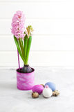 Pink hyacinth and easter eggs on grey concrete background Royalty Free Stock Photo