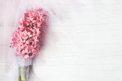 Pink Hyacinth flowers on white background; floral/spring background stock photo