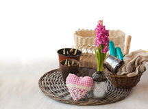 Pink hyacinth, garden tools and decorative heart Royalty Free Stock Image