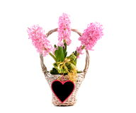 Pink Hyacinth and heart Stock Photos