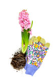 Pink hyacinth isolated on white Stock Photography