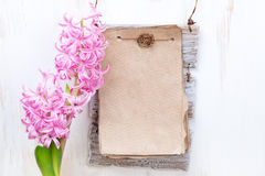 Pink hyacinth, paper for text on white background Royalty Free Stock Photos