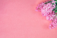 Pink hyacinth on pink copy space Royalty Free Stock Photography