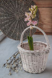 Pink hyacinth and willow twigs on the eve of Easter Royalty Free Stock Photos