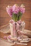 Pink hyacinths Stock Photo
