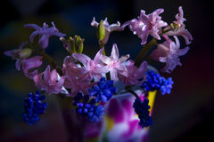Pink hyacinths in a bouquet with blue flowers Royalty Free Stock Image