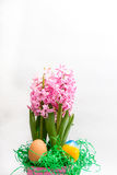 Pink hyacinths and easter eggs Stock Photography