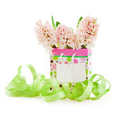 Pink hyacinths and greeting card Stock Photography