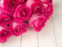 Pink hybrid tea roses Stock Photography