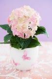 Pink hydrangea flower Stock Photos