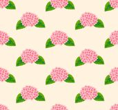 Pink Hydrangea Flower Seamless on Beige Ivory Background. Vector Illustration. Royalty Free Stock Photos
