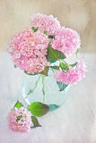Pink hydrangea flowers Stock Images