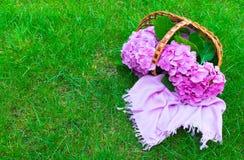 Pink hydrangea flowers in a wicker basket on lush green grass. stock photos