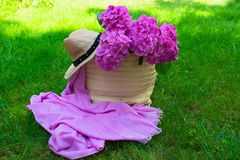 Pink hydrangea flowers in a wicker women`s summer bag and a sun hat on lush green grass. Pink hydrangea flowers in a wicker women`s summer bag and a sun hat on stock image