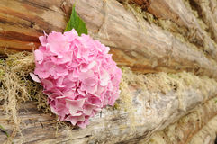 Pink Hydrangea Flowers on Wooden Wall Stock Photography