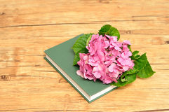Pink hydrangea on top of a green story book. A pink hydrangea on top of a green story book Stock Photography