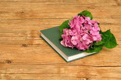 A pink hydrangea on top of a green story book. On a wooden background Stock Image