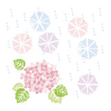 Pink hydrangea and umbrellas in rainy season Royalty Free Stock Photo