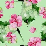 Pink hydrangea watercolor seamless pattern. Stock Photo