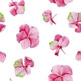 Pink hydrangea watercolor seamless pattern. Stock Photos