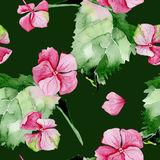Pink hydrangea watercolor seamless pattern. Royalty Free Stock Photography