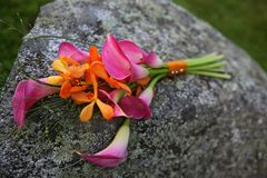 Pink illies laying on a stone royalty free stock image