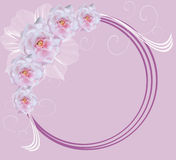 Pink illustration with circle frame Stock Images