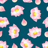 Pink Indian Lotus On Navy Blue Background Nelumbo Nuciferasacred
